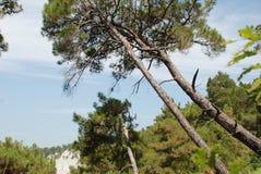 Όμορφη άποψη της άγριας αναψυχής Στοκ εικόνα με δικαίωμα ελεύθερης χρήσης