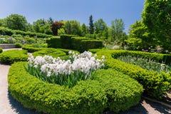 Όμορφη άποψη της Νίκαιας του βοτανικού κήπου με τα άσπρα χνουδωτά λουλούδια, τοπίο στοκ εικόνες