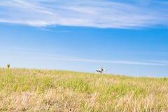 Όμορφη άποψη τοπίων της πράσινης χλόης στο πάρκο Utsukushigahara στοκ φωτογραφία με δικαίωμα ελεύθερης χρήσης