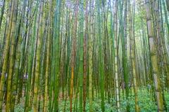 Όμορφη άποψη του δάσους μπαμπού σε Arashiyama, Κιότο, Ιαπωνία Στοκ εικόνες με δικαίωμα ελεύθερης χρήσης