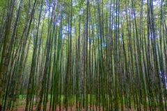 Όμορφη άποψη του δάσους μπαμπού σε Arashiyama, Κιότο, Ιαπωνία Στοκ φωτογραφίες με δικαίωμα ελεύθερης χρήσης