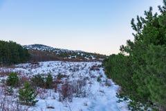 Όμορφη άποψη του βουνού με το αειθαλές πεύκο δασικό και καλό λίγο δέντρο στη γωνία Ρωσία, Stary Krym Στοκ εικόνα με δικαίωμα ελεύθερης χρήσης