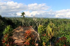 Όμορφη άποψη του δάσους στους τροπικούς κύκλους Ινδονησία, Μπαλί Στοκ Φωτογραφίες