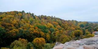 Όμορφη άποψη του δάσους φθινοπώρου Στοκ Εικόνα