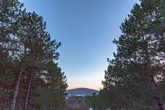 Όμορφη άποψη του πορτοκαλιού ηλιοβασιλέματος στο υψηλό δάσος πεύκων και μιας μικρής ημισελήνου στον ουρανό Ρωσία, Stary Krym Στοκ Εικόνες