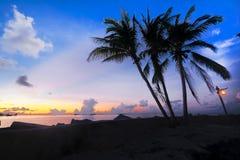 Όμορφη άποψη του φοίνικα σκιαγραφιών στοκ φωτογραφία με δικαίωμα ελεύθερης χρήσης