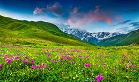 Όμορφη άποψη των αλπικών λιβαδιών στα βουνά Καύκασου Στοκ Φωτογραφία