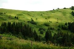 Όμορφη άποψη των λόφων βουνών και των δέντρων, conce θερινού ταξιδιού Στοκ φωτογραφίες με δικαίωμα ελεύθερης χρήσης