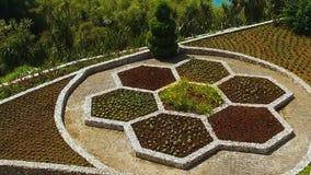 Όμορφη έκθεση λουλουδιών, βοτανικός κήπος Batumi στην ακτή Μαύρης Θάλασσας, άνοιξη φιλμ μικρού μήκους