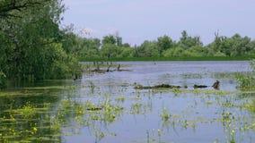 Όμορφη λίμνη στο δέλτα Δούναβη απόθεμα βίντεο