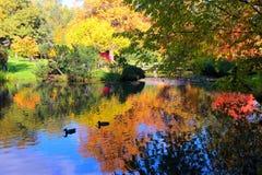Όμορφη λίμνη φθινοπώρου τις πάπιες και τα δέντρα που απεικονίζονται με στο νερό Στοκ Φωτογραφίες