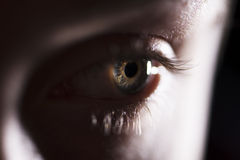 όμορφη ίριδα Στοκ εικόνες με δικαίωμα ελεύθερης χρήσης