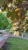 Όμορφη αλέα πάρκων την άνοιξη στοκ εικόνες