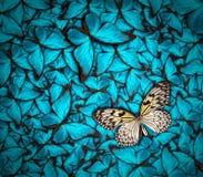 Όμορφη ανασκόπηση πεταλούδων Στοκ Εικόνα