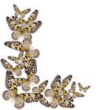 Όμορφη ανασκόπηση πεταλούδων Στοκ Εικόνες