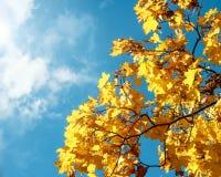 Όμορφη ανασκόπηση φθινοπώρου Στοκ εικόνα με δικαίωμα ελεύθερης χρήσης