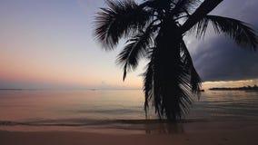 Όμορφη ανατολή πέρα από την εξωτική παραλία Τροπικά κύματα θάλασσας κάτω από το μπλε ουρανό απόθεμα βίντεο