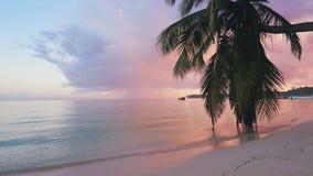 Όμορφη ανατολή πέρα από την τροπική παραλία με τους φοίνικες καρύδων Θέρετρο Cana Punta, Δομινικανή Δημοκρατία απόθεμα βίντεο