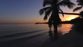 Όμορφη ανατολή πέρα από τη θάλασσα με μια άποψη στους φοίνικες στην άσπρη παραλία σε ένα νησί Καραϊβικής φιλμ μικρού μήκους
