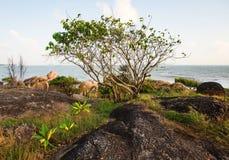 Όμορφη ανατολή με το δέντρο στο βράχο πέρα από τη θάλασσα Στοκ φωτογραφία με δικαίωμα ελεύθερης χρήσης