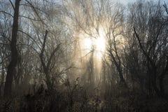 Όμορφη ανατολή του Οχάιου στο δάσος Στοκ φωτογραφία με δικαίωμα ελεύθερης χρήσης