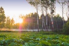 όμορφη ανατολή Στοκ εικόνα με δικαίωμα ελεύθερης χρήσης