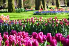 όμορφη ανθίζοντας άνοιξη κήπων Στοκ Εικόνα