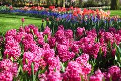 όμορφη ανθίζοντας άνοιξη κήπων Στοκ εικόνα με δικαίωμα ελεύθερης χρήσης