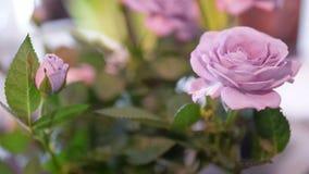 Όμορφη ανθοδέσμη κινηματογραφήσεων σε πρώτο πλάνο με τα πορφυρά τριαντάφυλλα στο φυσικό φως Στοκ Φωτογραφίες