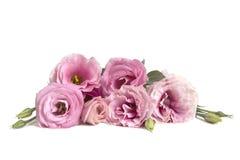 Όμορφη ανθοδέσμη λουλουδιών Lisianthus στο άσπρο υπόβαθρο Στοκ Εικόνες