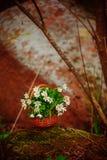 Όμορφη ανθοδέσμη του nemorosa Anemone Στοκ Εικόνες