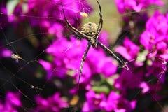 Όμορφη αράχνη με το flowery υπόβαθρο Στοκ Φωτογραφίες