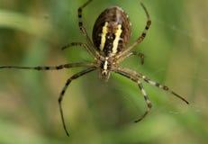 Όμορφη αράχνη στον Ιστό στοκ φωτογραφίες