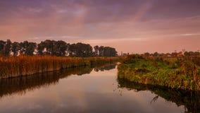 Όμορφη αυγή στην όχθη ποταμού με τα όμορφα λουλούδια απόθεμα βίντεο