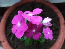 Όμορφη αύξηση λουλουδιών στοκ φωτογραφίες