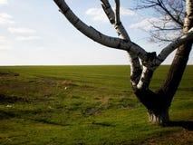 όμορφη βλάστηση δέντρων ουρανού τοπίων πεδίων Στοκ Εικόνα