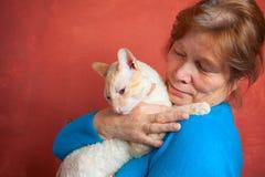 Όμορφη γάτα με τη σγουρή τρίχα Στοκ Εικόνα