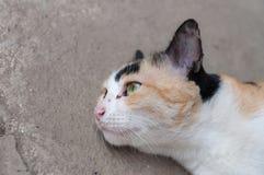 Όμορφη γάτα πορτρέτου στοκ φωτογραφία με δικαίωμα ελεύθερης χρήσης
