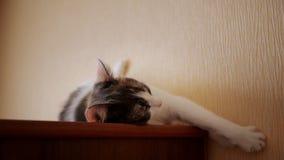Όμορφη γάτα που βρίσκεται στο ντουλάπι απόθεμα βίντεο