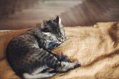 Όμορφη γάτα που γλείφει και που πλένεται στο μοντέρνο κίτρινο κενό Στοκ φωτογραφίες με δικαίωμα ελεύθερης χρήσης