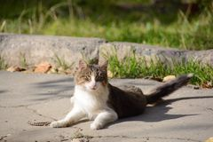 Όμορφη γάτα που περιμένει το θήραμα Στοκ φωτογραφία με δικαίωμα ελεύθερης χρήσης