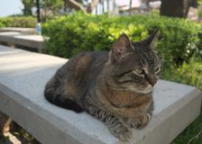 Όμορφη γάτα που φωτογραφίζεται από μια στενή απόσταση στοκ εικόνες με δικαίωμα ελεύθερης χρήσης