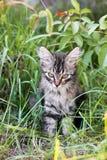 Όμορφη γάτα στην οδό στοκ εικόνες