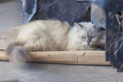 Όμορφη γάτα στην οδό Στοκ φωτογραφία με δικαίωμα ελεύθερης χρήσης