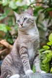 Όμορφη γάτα στον κήπο Στοκ Εικόνες