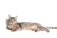 όμορφη γάτα τιγρέ Στοκ φωτογραφία με δικαίωμα ελεύθερης χρήσης