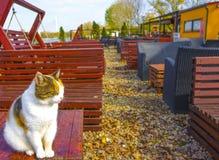 Όμορφη γάτα τοποθέτησης Στοκ εικόνες με δικαίωμα ελεύθερης χρήσης