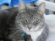 όμορφη γάτα Στοκ φωτογραφίες με δικαίωμα ελεύθερης χρήσης