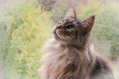 όμορφη γάτα στοκ εικόνες