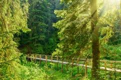 Όμορφη γέφυρα στο δάσος με τις ακτίνες του ήλιου Στοκ φωτογραφία με δικαίωμα ελεύθερης χρήσης